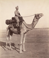 [A sowar of the Bikaner Camel Corps on his mount showing details of kit.]